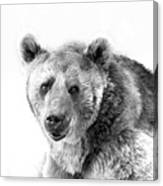 Wb Portrait Of A Bear Canvas Print