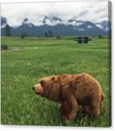 We Saw A Bear Canvas Print