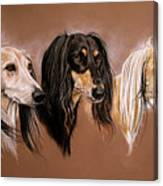 'we Three Salukis' Canvas Print