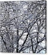 Weather Patterns Canvas Print
