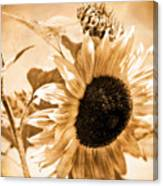 Weathered Beauty Canvas Print