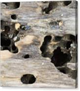 Weathered Driftwood Canvas Print