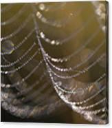 Web Sparkle Canvas Print