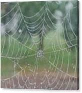 Webbed Canvas Print