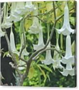 Wedding Bells Canvas Print