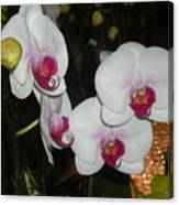 Wedding Orchids Canvas Print