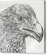 Wedgetail Eagle Canvas Print
