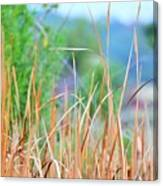 Weeds 033 Canvas Print