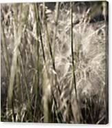 Weeds #1 - 310061 Canvas Print