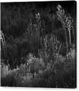 Weeds 5 Canvas Print