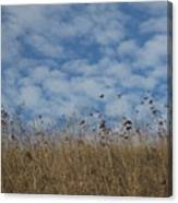 Weeds And Dappled Sky Canvas Print