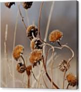 Weeds Are Pretty Too Canvas Print