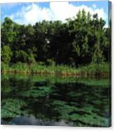 Weeki Wachee River Canvas Print