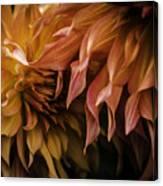 Weeping Petals Canvas Print