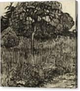 Weeping Tree Canvas Print