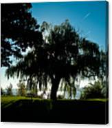 Weeping Willow Silhouette Canvas Print