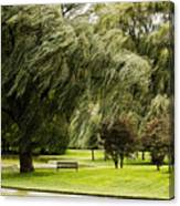 Weeping Willow Trees On Windy Day Canvas Print