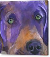 Weimaraner Dog Art Canvas Print