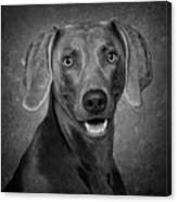 Weimaraner In Black And White Canvas Print