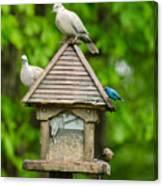 Welcome To My Bird Feeder Canvas Print
