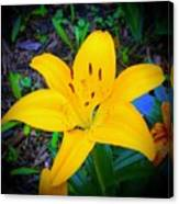 Welcoming Lily Canvas Print