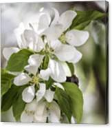 Welcoming Spring Canvas Print