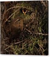 Well Hidden Nest Canvas Print