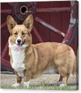 Welsh Pembroke Corgi Dog Outdoors Canvas Print