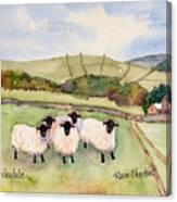 Wensleydale Sheep Canvas Print