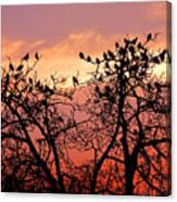 Wente Road Sunset Canvas Print
