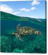 West Maui Green Sea Turtle Canvas Print