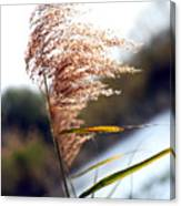 West Wind Today Canvas Print
