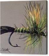 Western Green Drake Canvas Print