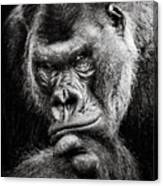 Western Lowland Gorilla Bw II Canvas Print