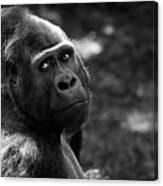Western Lowland Gorilla Closeup Canvas Print