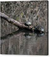Western Painted Turtles On A Log Canvas Print