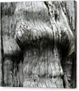 Western Red Cedar - Thuja Plicata - Olympic National Park Wa Canvas Print