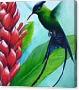 Western Streamertail Hummingbird Canvas Print