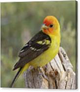 Western Tanager Canvas Print