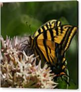 Western Tiger Swallowtail Canvas Print