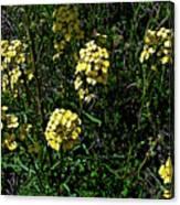 Western Wallflower Along Etiwanda Falls Trail In San Gabriel Mountains-california Canvas Print