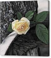 Western Yellow Rose Iv Canvas Print
