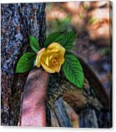 Western Yellow Rose Viii Canvas Print