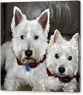 Westie World Canvas Print
