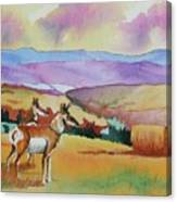 Westriver Pronghorn Canvas Print