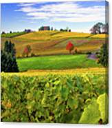 Westward From Domaine Drouhin Canvas Print