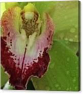 Wet Bloom Canvas Print
