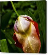 Wet Flower Canvas Print