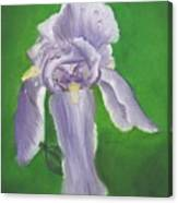 Wet Iris Canvas Print