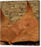 Wet Leaf Canvas Print